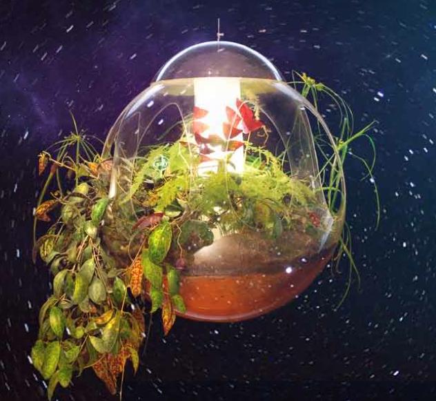 Astral Mood alexis tricoire La nature en lévitation FLORALIES DE NANTES DU 8 AU 18 MAI 2014