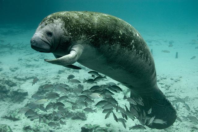 © U.S. Fish and Wildlife Service Headquarters