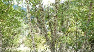 Gorges & Haut Verdon ©LuxuryTouch